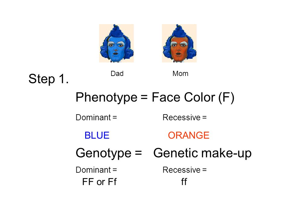 Step 1. Phenotype = Face Color (F) Dominant = Recessive = BLUE ORANGE Genotype = Genetic make-up Dominant = Recessive = FF or Ff ff Dad Mom