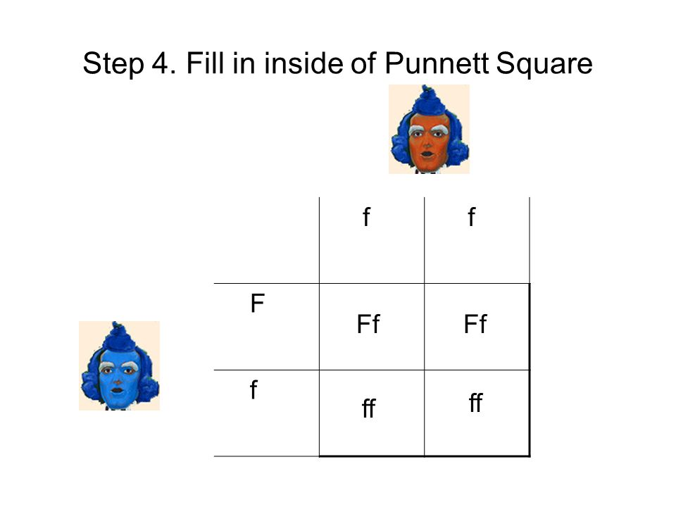 Step 4. Fill in inside of Punnett Square f f F f Ff ff