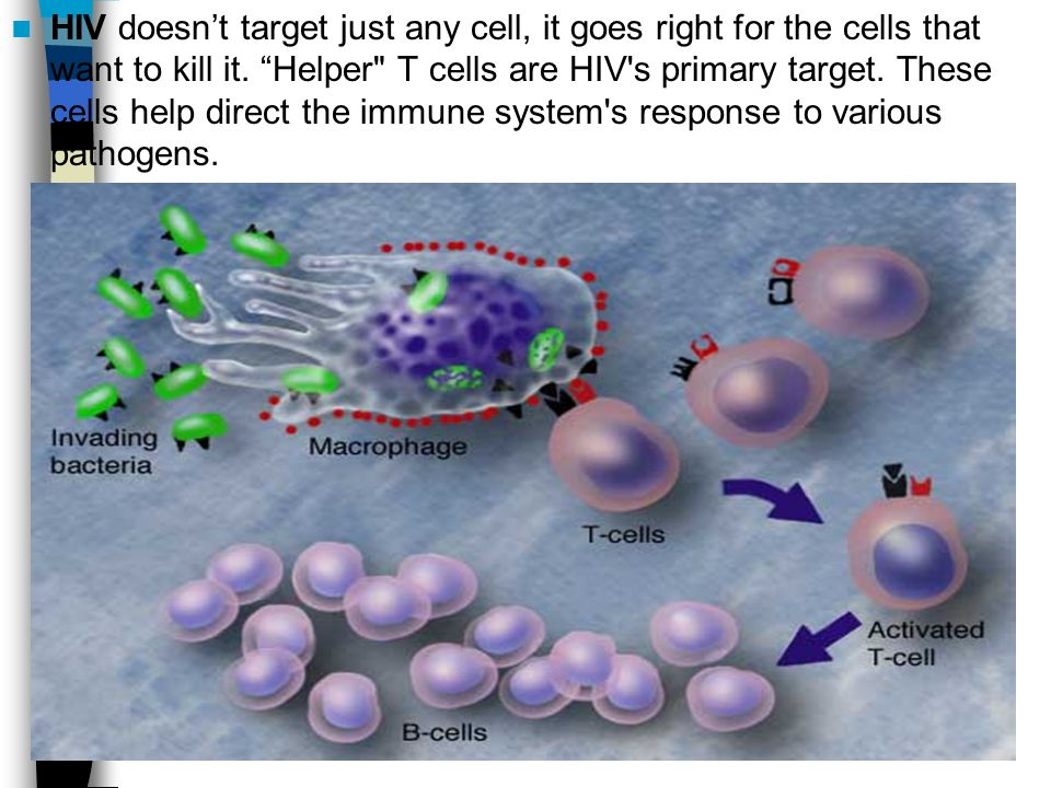 HIV doesnt target just any cell, it goes right for the cells that want to kill it.