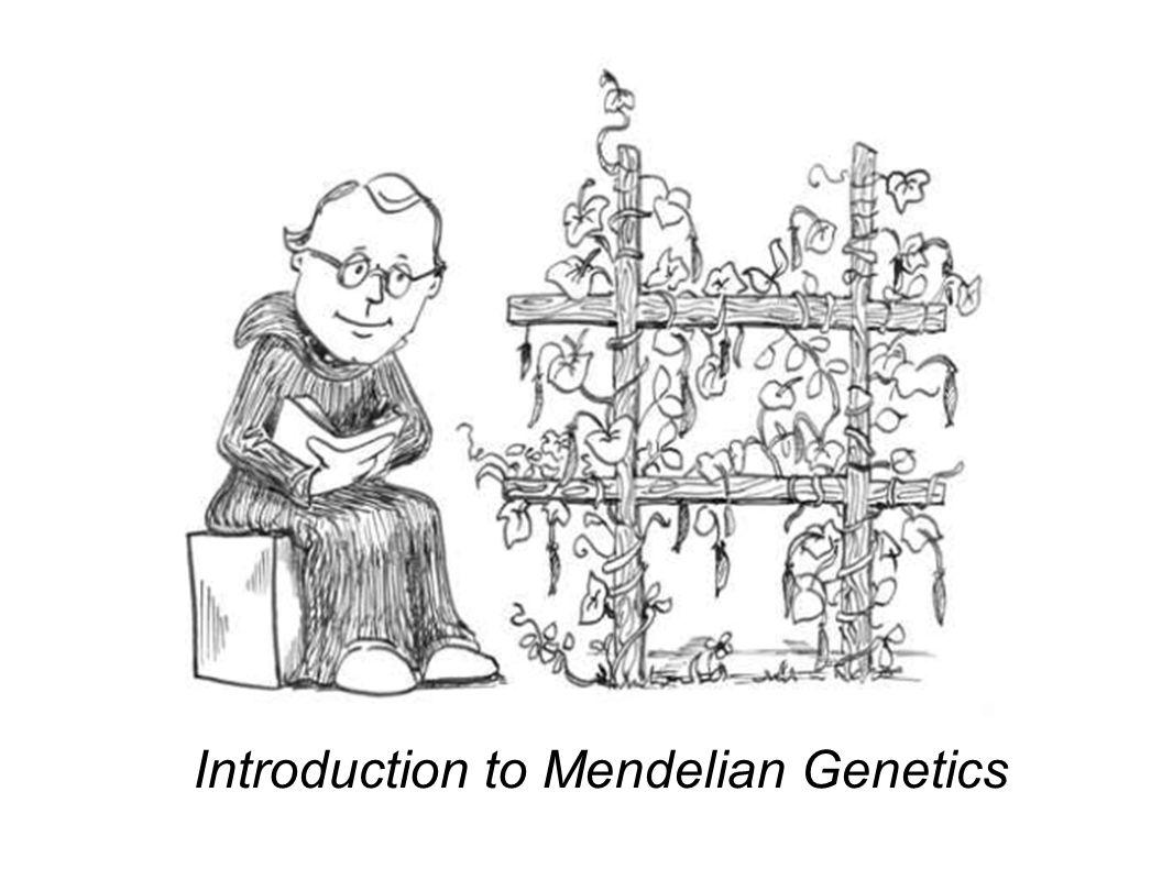 Introduction to Mendelian Genetics