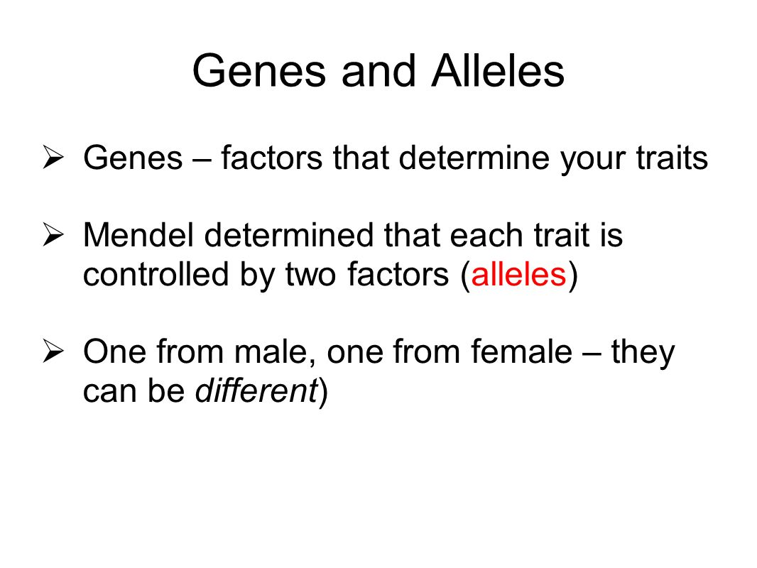 Genes and Alleles Genes – factors that determine your traits Mendel determined that each trait is controlled by two factors (alleles) One from male, o