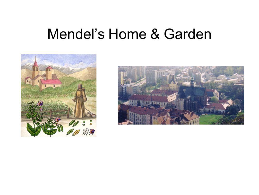 Mendels Home & Garden