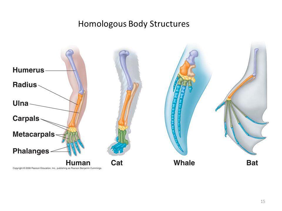 15 Homologous Body Structures