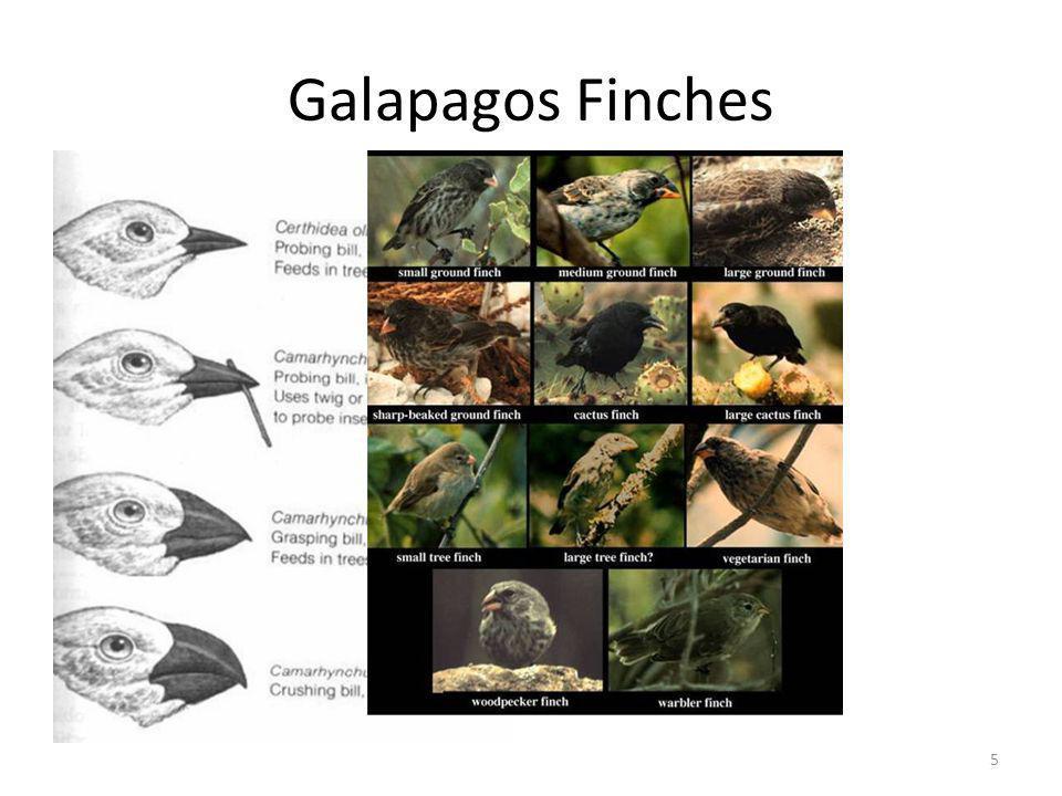 Galapagos Finches 5