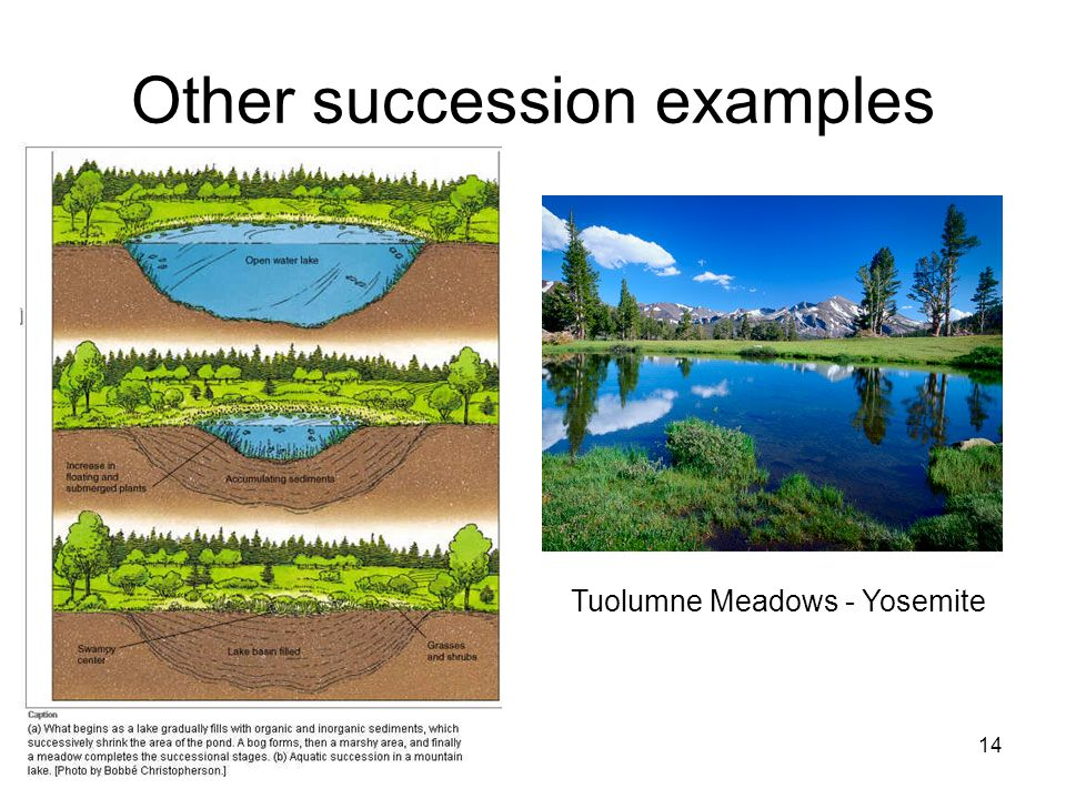 Other succession examples 14 Tuolumne Meadows - Yosemite