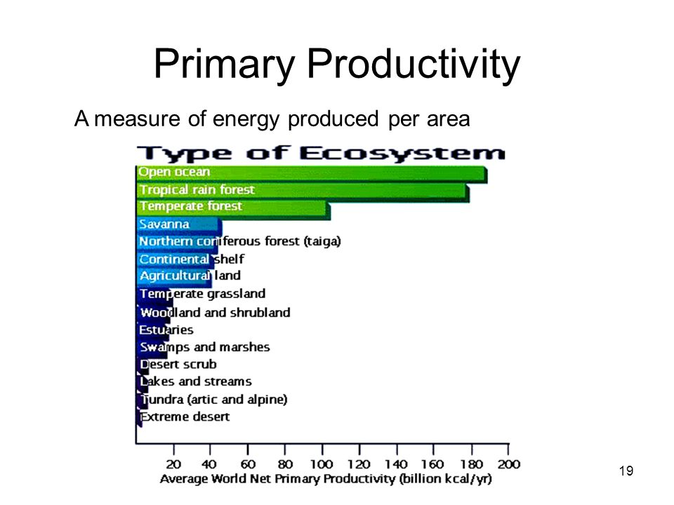 Primary Productivity 19 A measure of energy produced per area