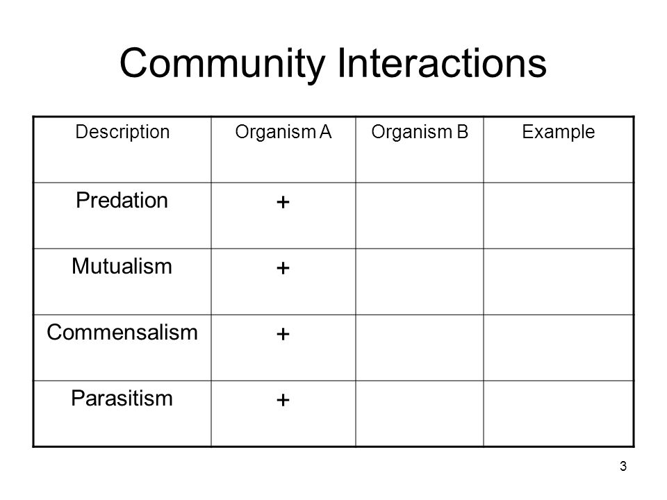 Community Interactions DescriptionOrganism AOrganism BExample Predation + Mutualism + Commensalism + Parasitism + 3