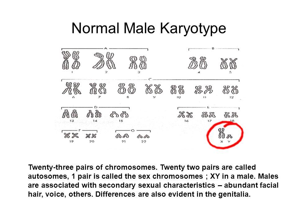 Normal Male Karyotype Twenty-three pairs of chromosomes. Twenty two pairs are called autosomes, 1 pair is called the sex chromosomes ; XY in a male. M