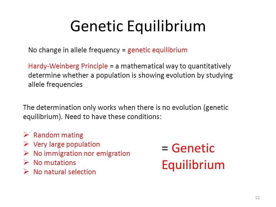 Genetic Equilibrium 12 No change in allele frequency = genetic equilibrium Hardy-Weinberg Principle = a mathematical way to quantitatively determine whether a population is showing evolution by studying allele frequencies The determination only works when there is no evolution (genetic equilibrium).