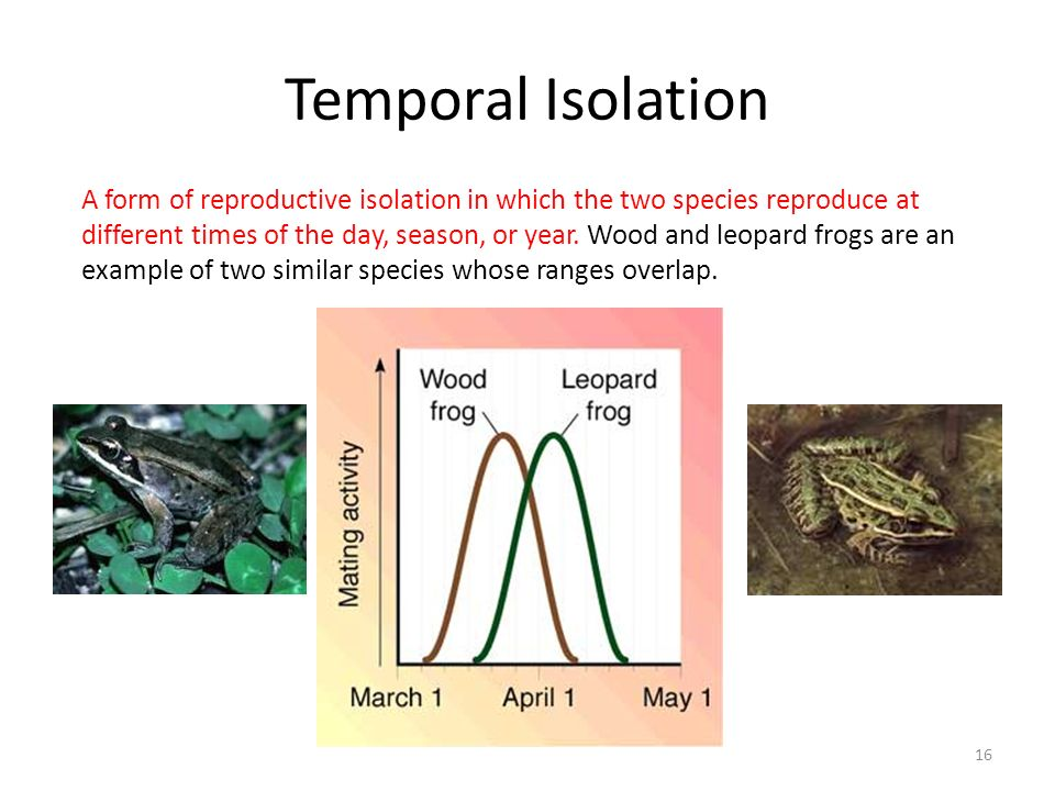 Temporal Isolation 16 A form of reproductive isolation in which the two species reproduce at different times of the day, season, or year.
