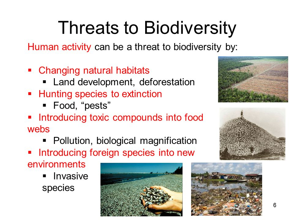 Threats to Biodiversity 6 Human activity can be a threat to biodiversity by: Changing natural habitats Land development, deforestation Hunting species