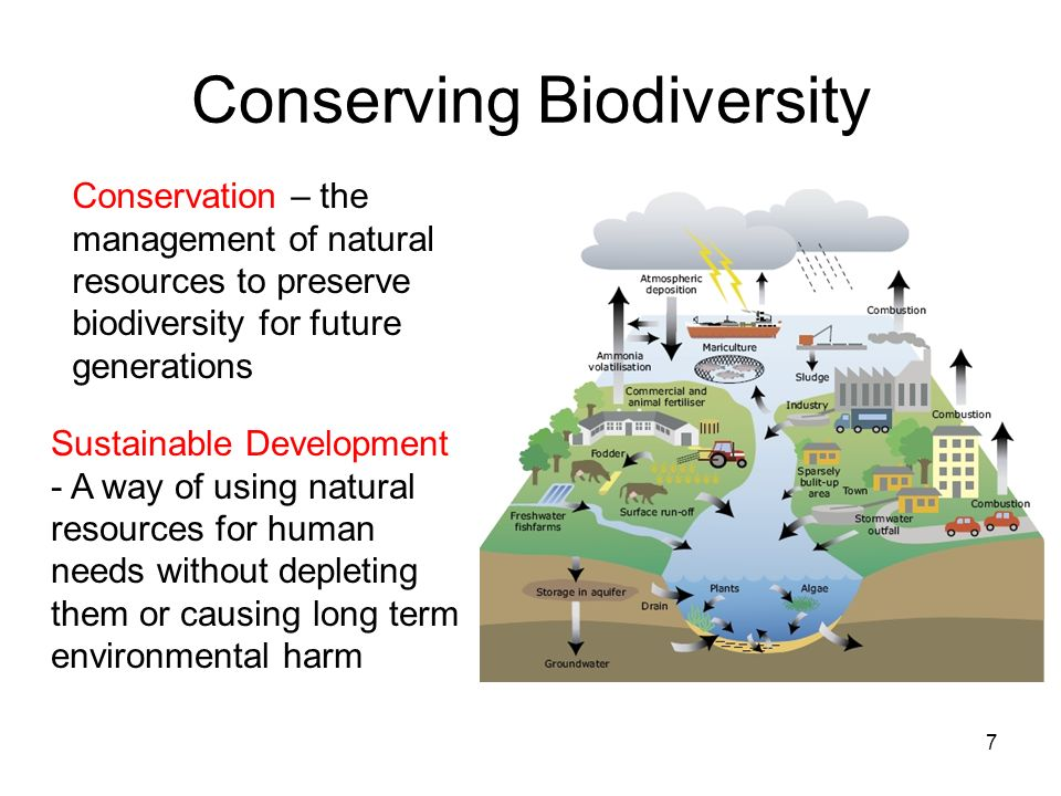 Conserving Biodiversity 7 Sustainable Development - A way of using natural resources for human needs without depleting them or causing long term envir