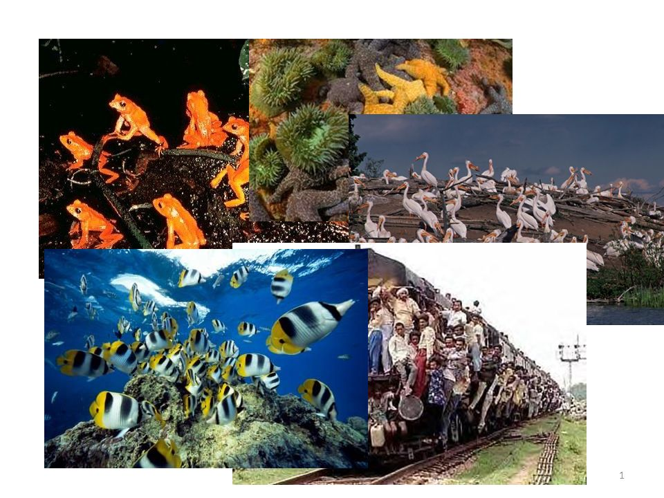 Population Ecology Basic ecological principles govern the growth and sustainability of all populations 1