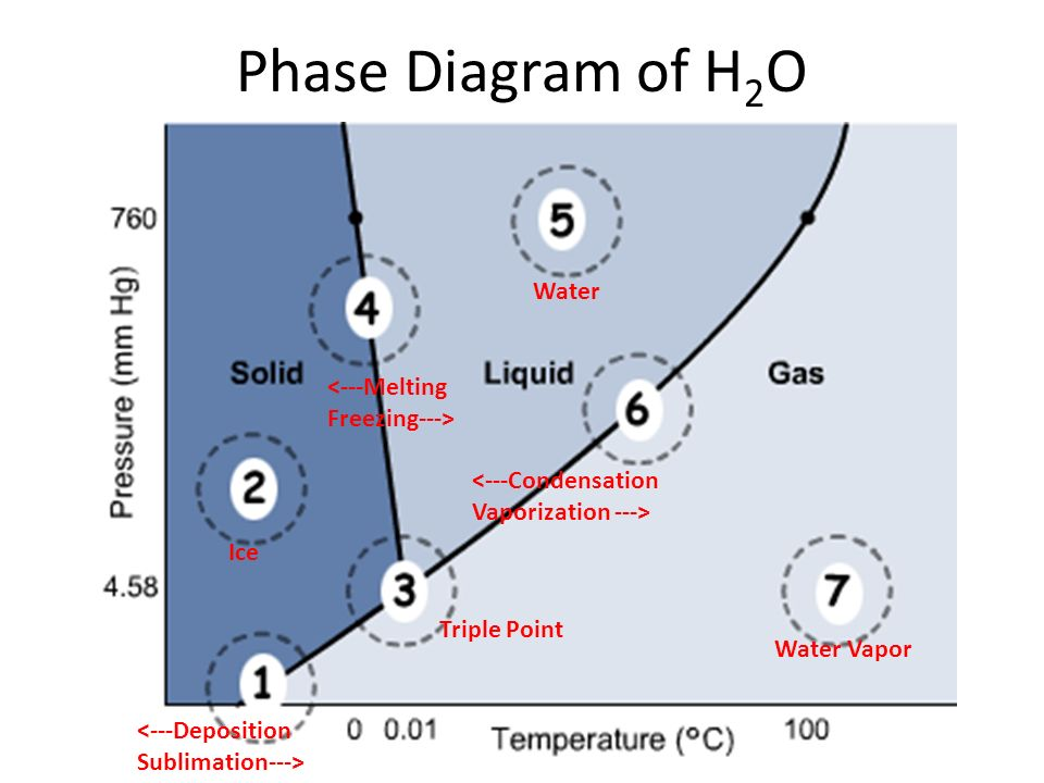 Phase Diagram of H 2 O Water Vapor <---Condensation Vaporization ---> Water Ice <---Melting Freezing---> Triple Point <---Deposition Sublimation--->