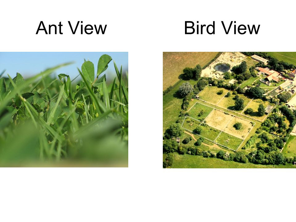 Ant ViewBird View