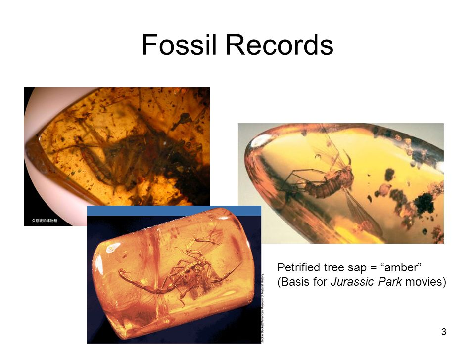 3 Petrified tree sap = amber (Basis for Jurassic Park movies)