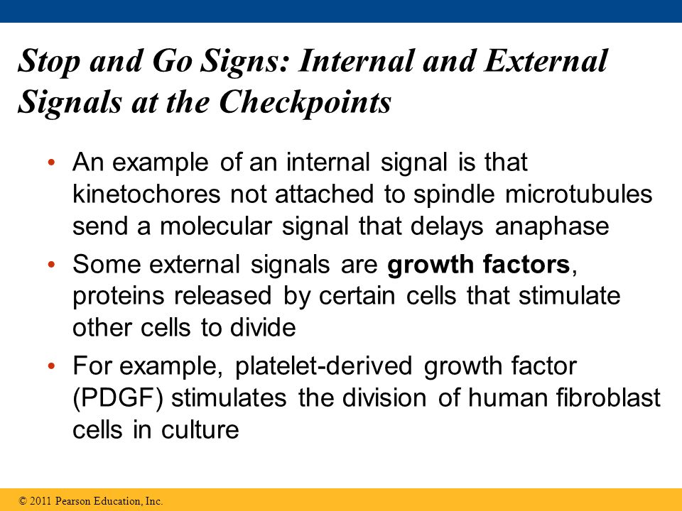 Stop and Go Signs: Internal and External Signals at the Checkpoints An example of an internal signal is that kinetochores not attached to spindle micr