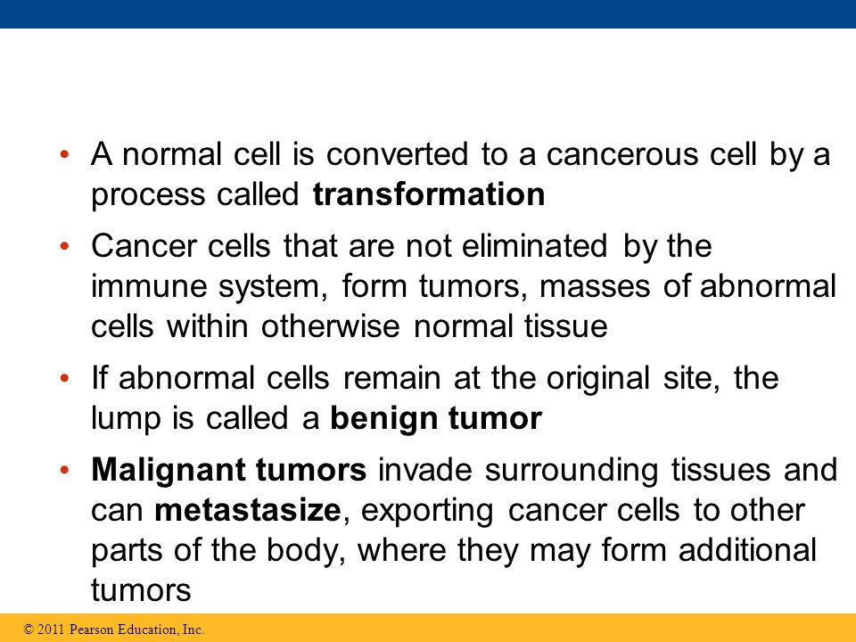 A normal cell is converted to a cancerous cell by a process called transformation Cancer cells that are not eliminated by the immune system, form tumors, masses of abnormal cells within otherwise normal tissue If abnormal cells remain at the original site, the lump is called a benign tumor Malignant tumors invade surrounding tissues and can metastasize, exporting cancer cells to other parts of the body, where they may form additional tumors © 2011 Pearson Education, Inc.