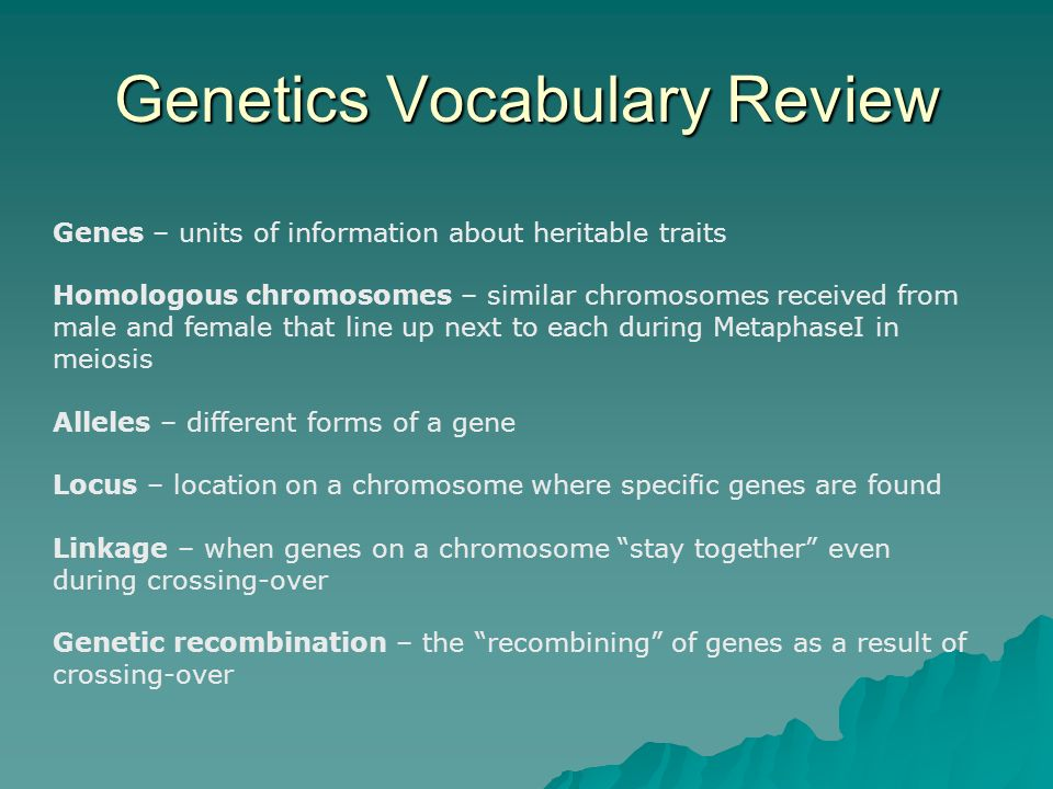 Genetics Vocabulary Review Genes – units of information about heritable traits Homologous chromosomes – similar chromosomes received from male and fem