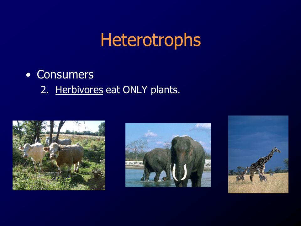 Heterotrophs Consumers 2. Herbivores eat ONLY plants.
