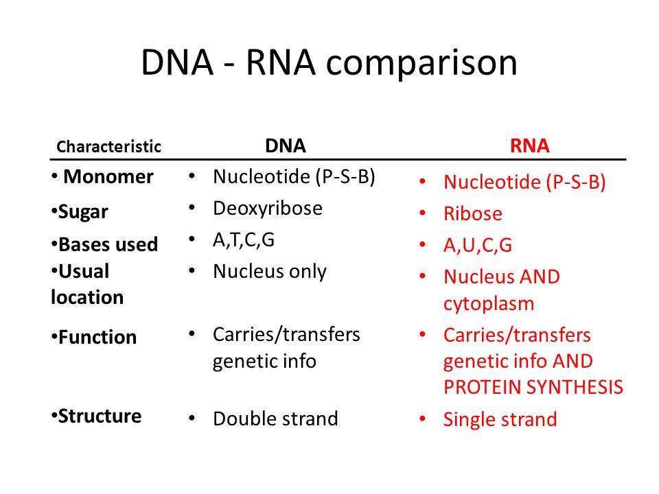 DNA - RNA comparison DNA Nucleotide (P-S-B) Deoxyribose A,T,C,G Nucleus only Carries/transfers genetic info Double strand RNA Nucleotide (P-S-B) Ribos