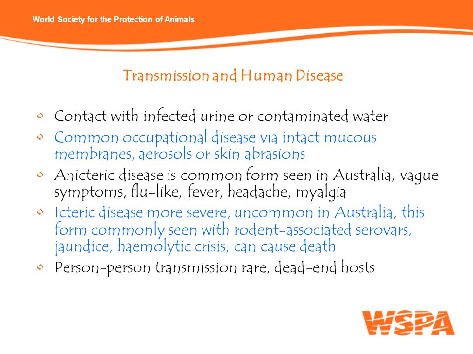 World Society for the Protection of Animals Contact with infected urine or contaminated water Common occupational disease via intact mucous membranes,