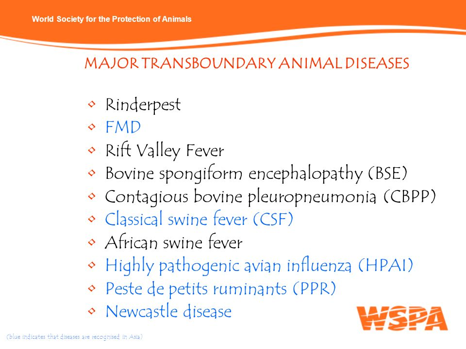 World Society for the Protection of Animals Rinderpest FMD Rift Valley Fever Bovine spongiform encephalopathy (BSE) Contagious bovine pleuropneumonia
