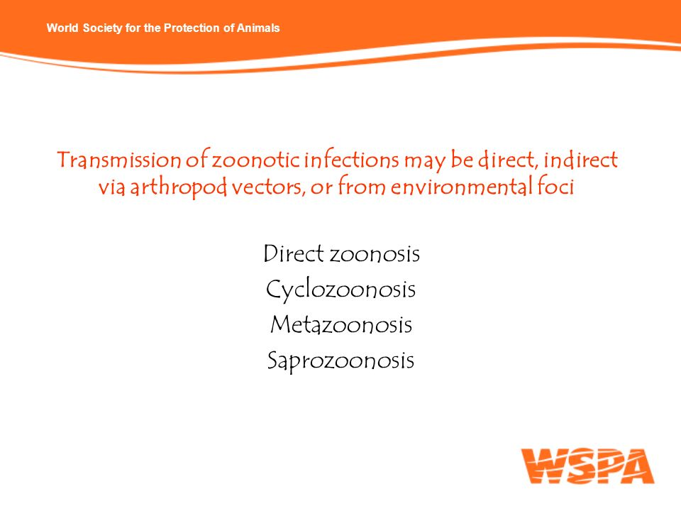 World Society for the Protection of Animals Transmission of zoonotic infections may be direct, indirect via arthropod vectors, or from environmental f