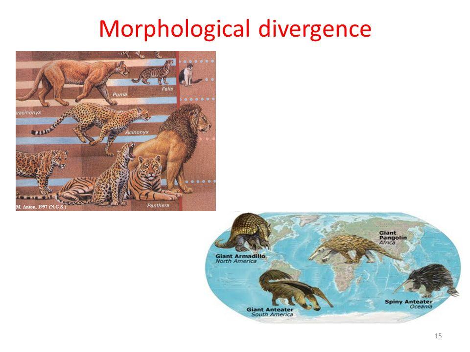 Morphological divergence 15