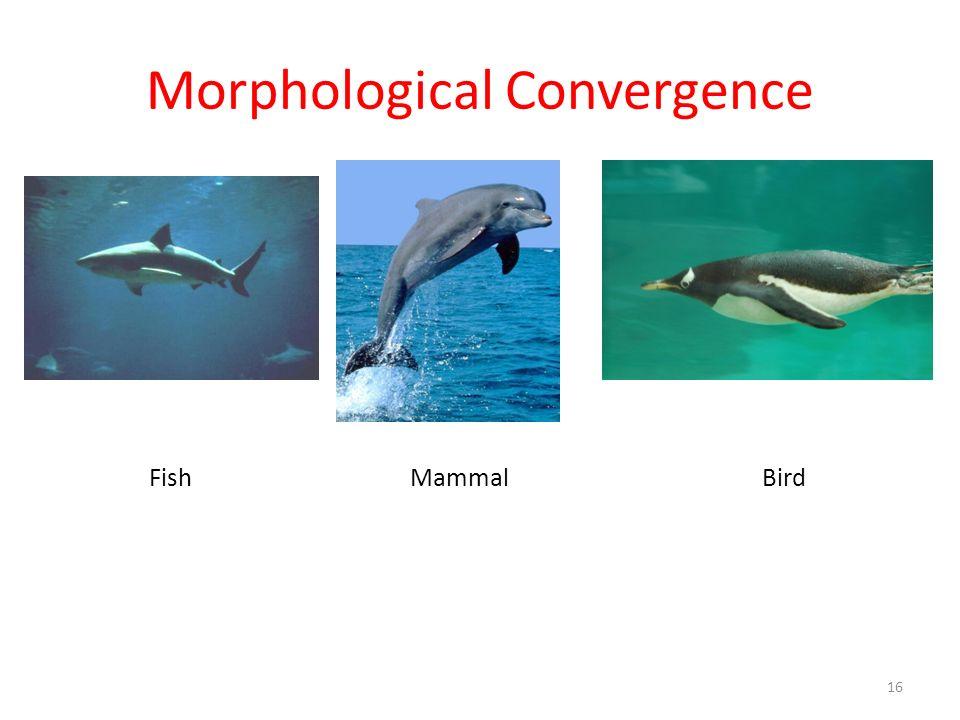 Morphological Convergence FishMammalBird 16