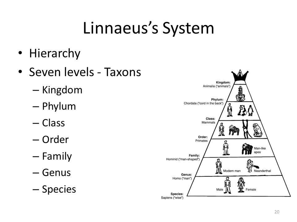 Linnaeuss System Hierarchy Seven levels - Taxons – Kingdom – Phylum – Class – Order – Family – Genus – Species 20