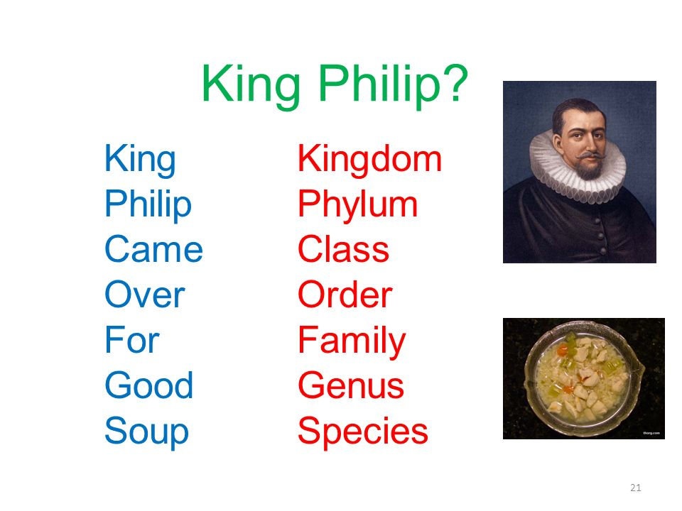 King Philip? King Philip Came Over For Good Soup Kingdom Phylum Class Order Family Genus Species 21