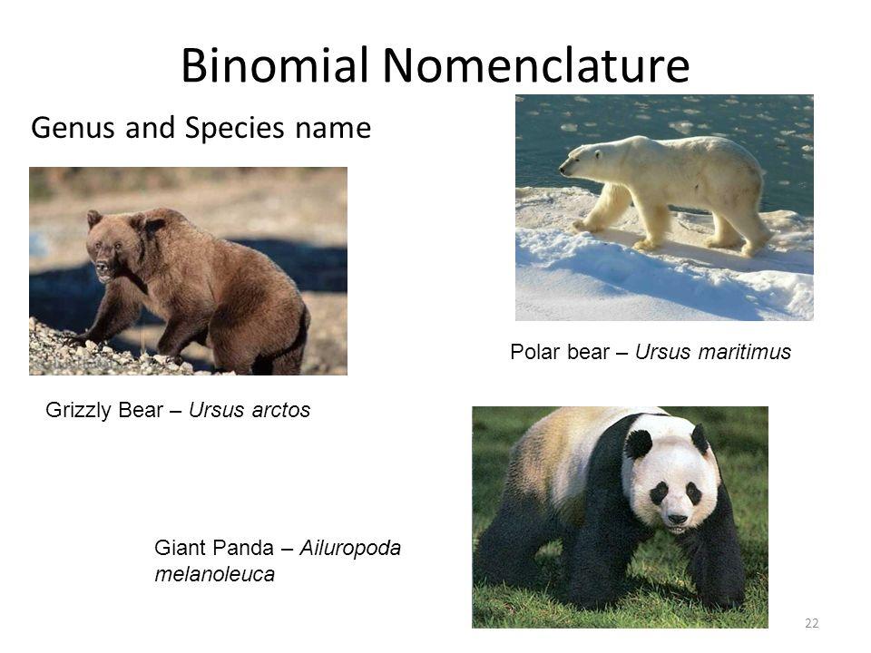 Binomial Nomenclature Genus and Species name Grizzly Bear – Ursus arctos Polar bear – Ursus maritimus Giant Panda – Ailuropoda melanoleuca 22