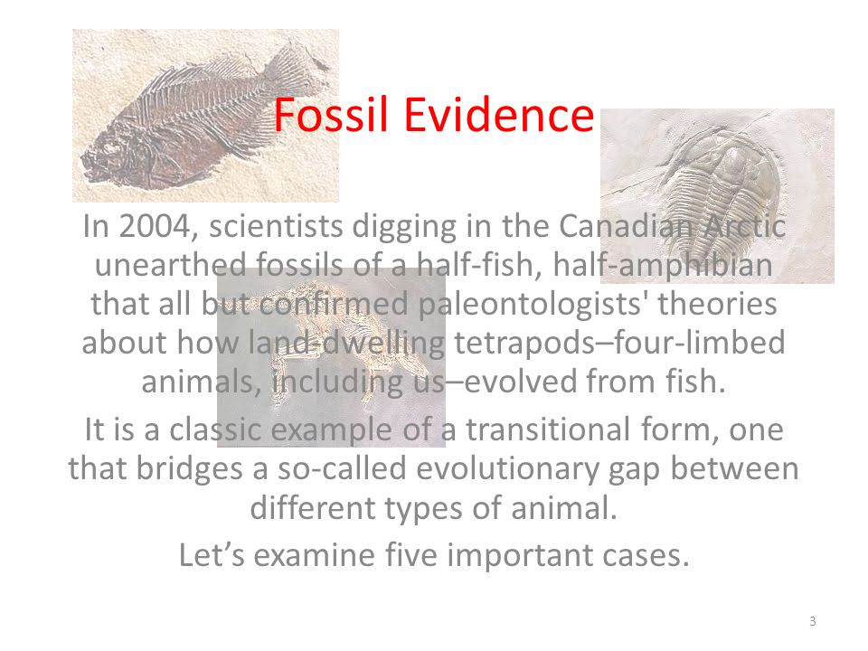 Fossil Evidence In 2004, scientists digging in the Canadian Arctic unearthed fossils of a half-fish, half-amphibian that all but confirmed paleontolog