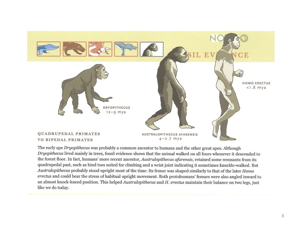 Systems of Classification Visual Location Anatomical Physiological Genetic ??.