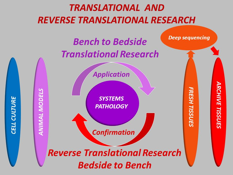 SYSTEMS PATHOLOGY Application Confirmation Bench to Bedside Translational Research Reverse Translational Research Bedside to Bench CELL CULTURE ANIMAL MODELS FRESH TISSUES ARCHIVE TISSUES Deep sequencing TRANSLATIONAL AND REVERSE TRANSLATIONAL RESEARCH