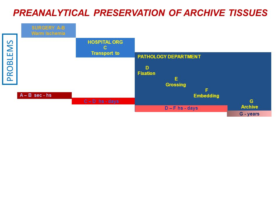 PREANALYTICAL PRESERVATION OF ARCHIVE TISSUES PATHOLOGY DEPARTMENT D Fixation E Grossing F Embedding G Archive SURGERY A-B Warm Ischemia HOSPITAL ORG C Transport to A – B sec - hs C – D hs - days D – F hs - days G - years Vacuum transport Time control PROBLEMS