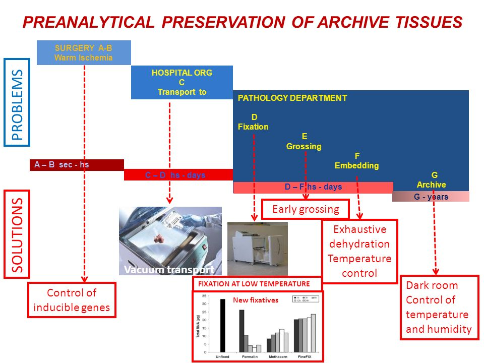 PREANALYTICAL PRESERVATION OF ARCHIVE TISSUES PATHOLOGY DEPARTMENT D Fixation E Grossing F Embedding G Archive SURGERY A-B Warm Ischemia HOSPITAL ORG C Transport to A – B sec - hs C – D hs - days D – F hs - days G - years Control of inducible genes Exhaustive dehydration Temperature control Early grossing Dark room Control of temperature and humidity Vacuum transport Time control New fixatives PROBLEMS SOLUTIONS FIXATION AT LOW TEMPERATURE