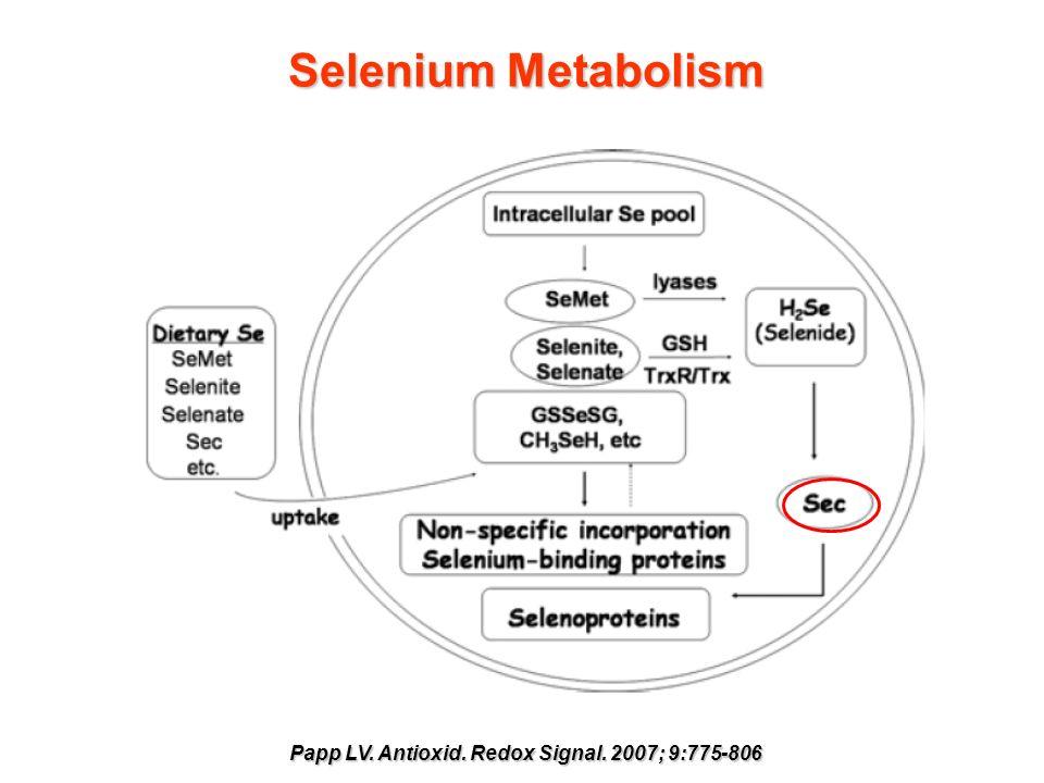 Selenium Metabolism Papp LV. Antioxid. Redox Signal. 2007; 9:775-806