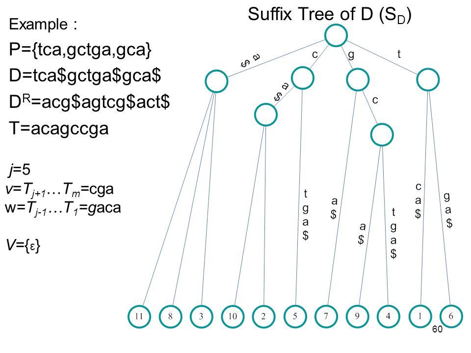 60 Suffix Tree of D (S D ) Example P={tca,gctga,gca} D=tca$gctga$gca$ D R =acg$agtcg$act$ T=acagccga j=5 v=T j+1 …T m =cga w=T j-1 …T 1 =gaca V={ ε }