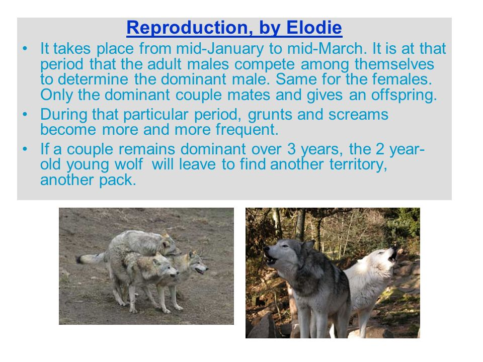 Reproduction, by Elodie It takes place from mid-January to mid-March.