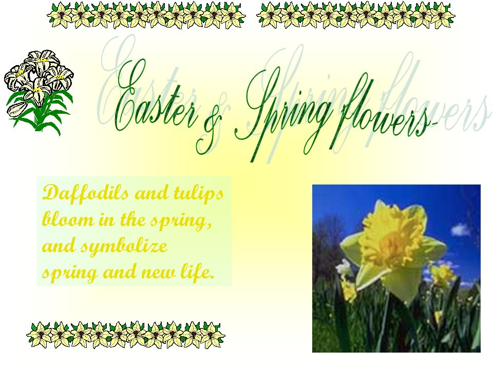 Daffodils and tulips bloom in the spring, and symbolize spring and new life.