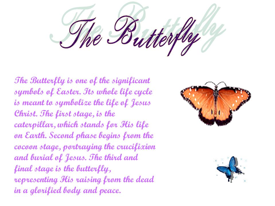 The Butterfly is one of the significant symbols of Easter. Its whole life cycle is meant to symbolize the life of Jesus Christ. The first stage, is th