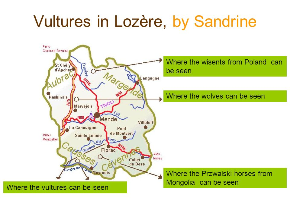 Vultures in Lozère, by Sandrine Where the vultures can be seen Where the wisents from Poland can be seen Where the wolves can be seen Where the Przwalski horses from Mongolia can be seen