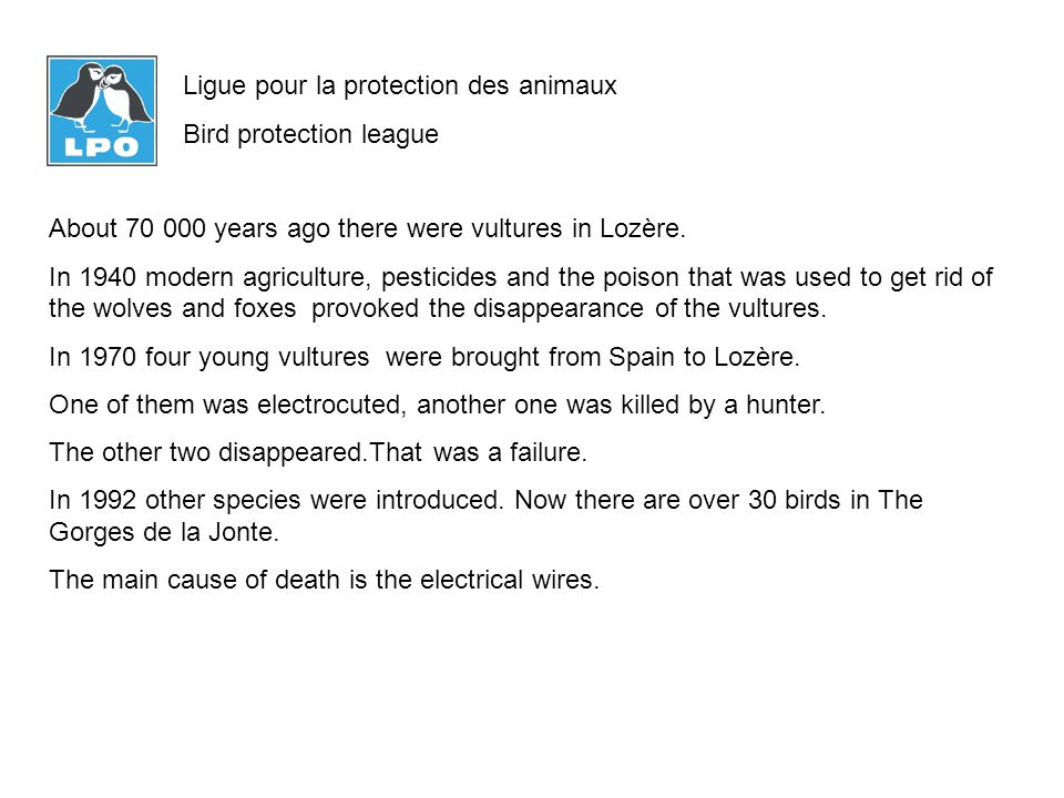 About 70 000 years ago there were vultures in Lozère.