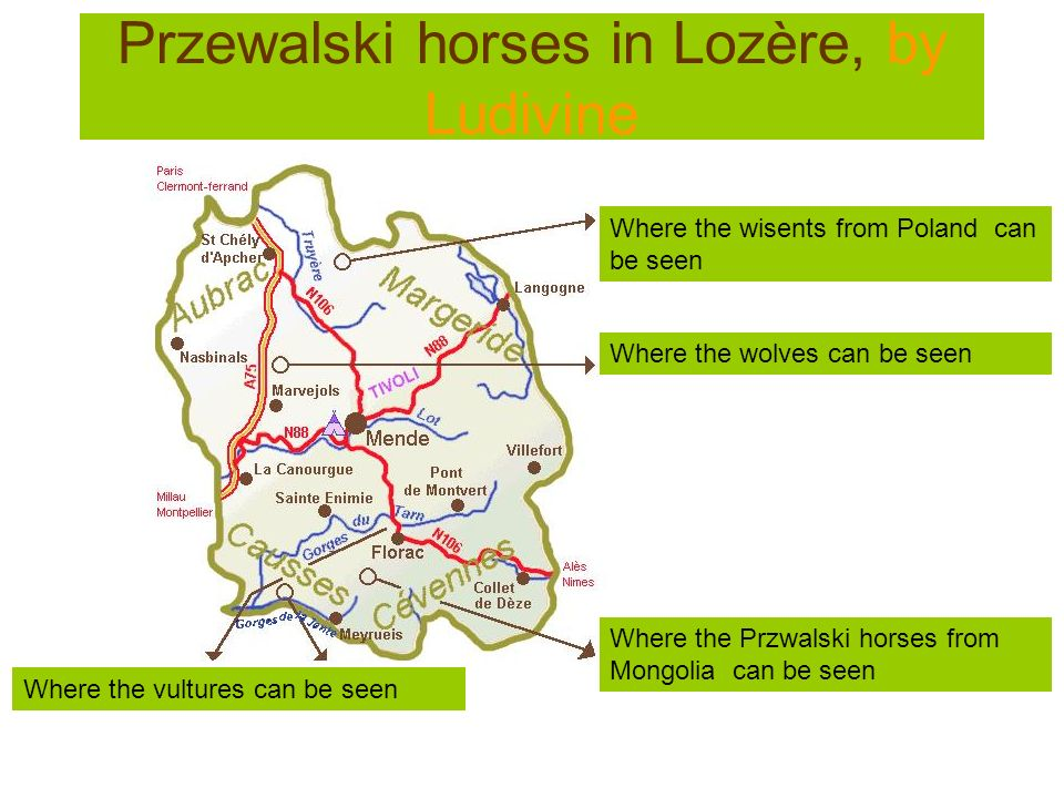 Przewalski horses in Lozère, by Ludivine Where the vultures can be seen Where the wisents from Poland can be seen Where the wolves can be seen Where t