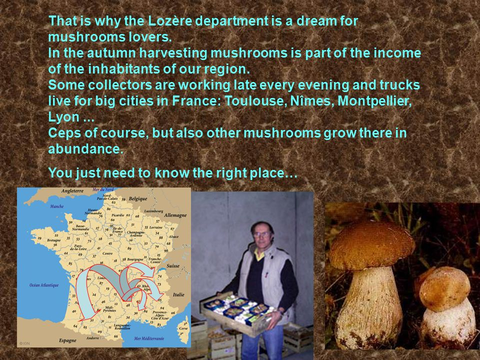 That is why the Lozère department is a dream for mushrooms lovers. In the autumn harvesting mushrooms is part of the income of the inhabitants of our