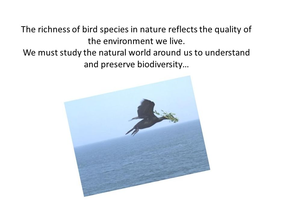 The richness of bird species in nature reflects the quality of the environment we live.