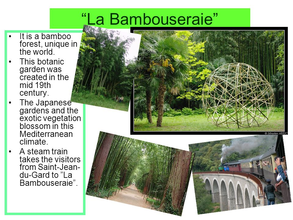 La Bambouseraie It is a bamboo forest, unique in the world.