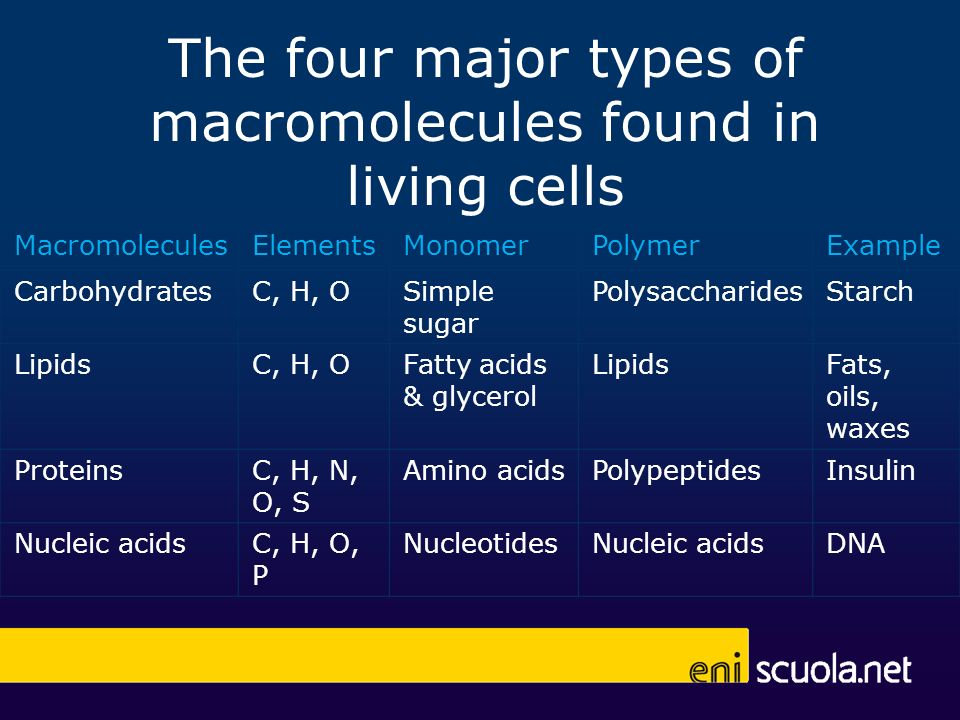 The four major types of macromolecules found in living cells MacromoleculesElementsMonomerPolymerExample CarbohydratesC, H, OSimple sugar Polysacchari